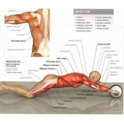 AB wheel total body Exerciser for abdominal exercise